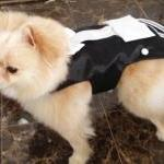 Dog Tuxedo Harness: Ring Be..